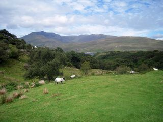 IrelandDSCN0439